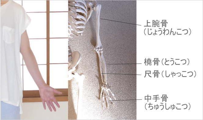 長い骨の種類・長骨