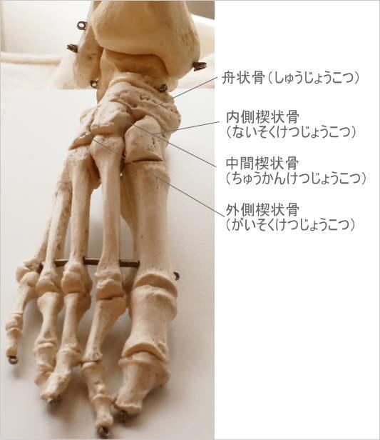 足の滑走関節