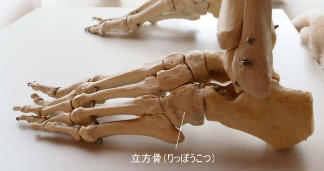 短骨である立方骨