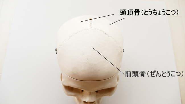 扁平骨である前頭骨や頭頂骨