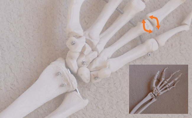 顆状関節の動き