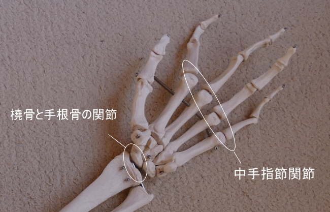 可動関節の種類、顆状関節