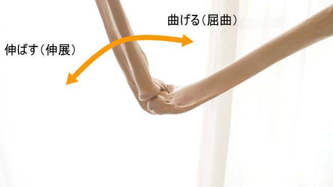 蝶番関節である肘関節の動き