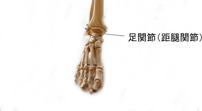 蝶番関節である足関節