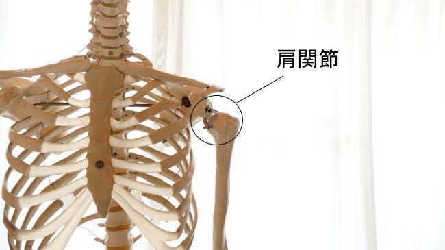 球関節である肩関節