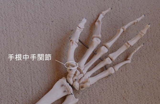 鞍関節である手根中手関節