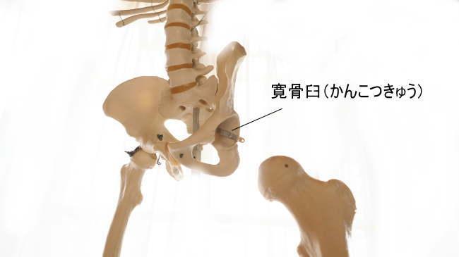 腸骨どこからどこまで