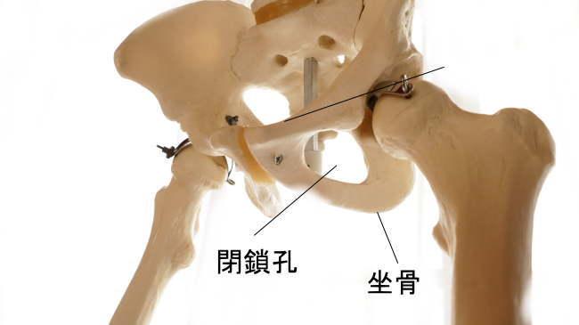恥骨と坐骨が作る閉鎖項