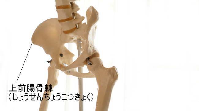 上前腸骨棘