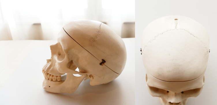 頭蓋骨の骨の数