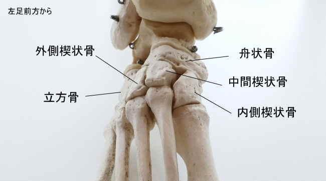 外側楔状骨と足根骨同士の関節