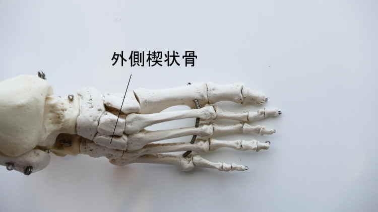 外側楔状骨