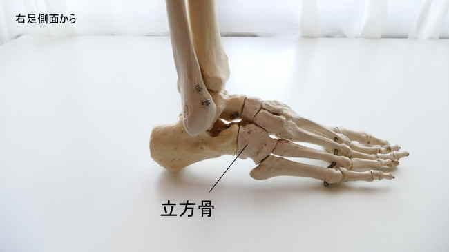 右足側面から見た立方骨