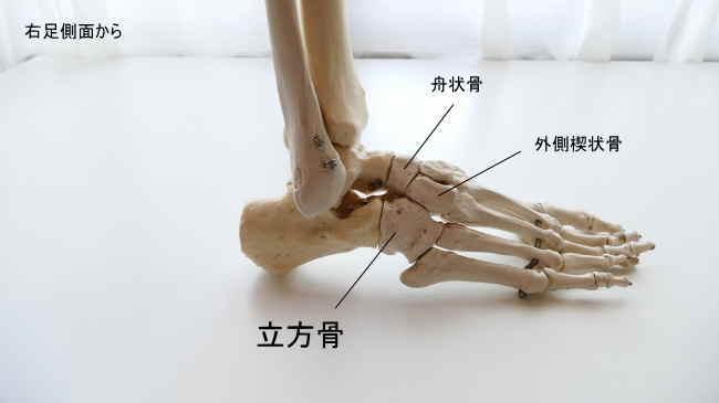 立方骨と足根骨同士の関節