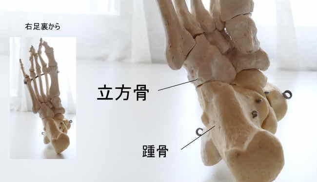 立方骨と踵骨の関節