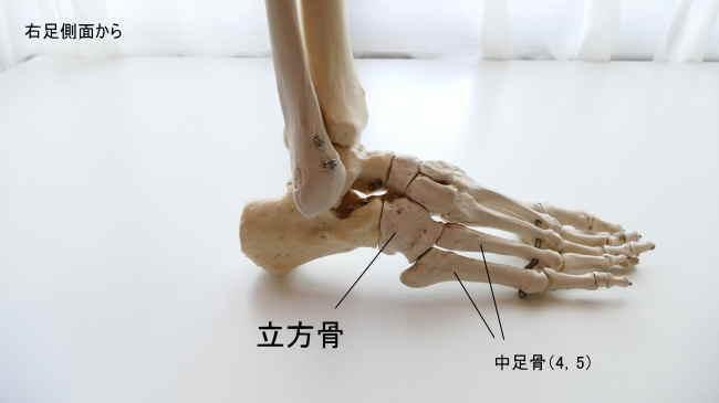 立方骨と中足骨の関節