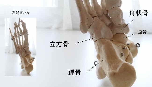 足根骨と後足部の関節