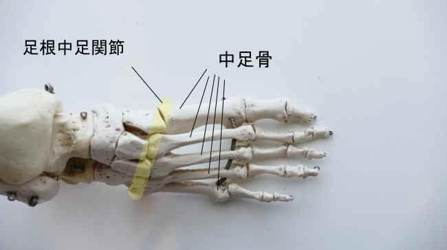 足根骨と中足骨の足根中足関節