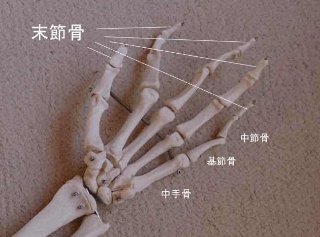 手の末節骨