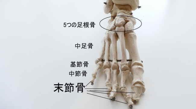 足の末節骨