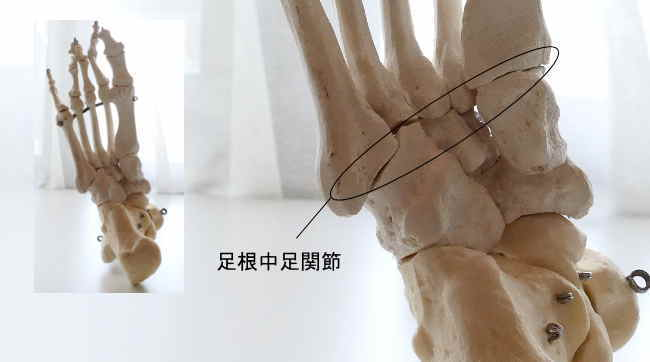 中足骨と足根骨の関節