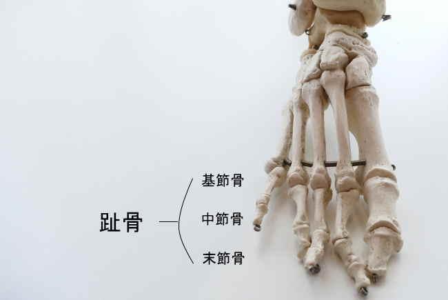 四指の趾骨