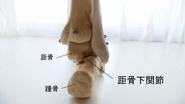 右足後ろから見た距骨下関節