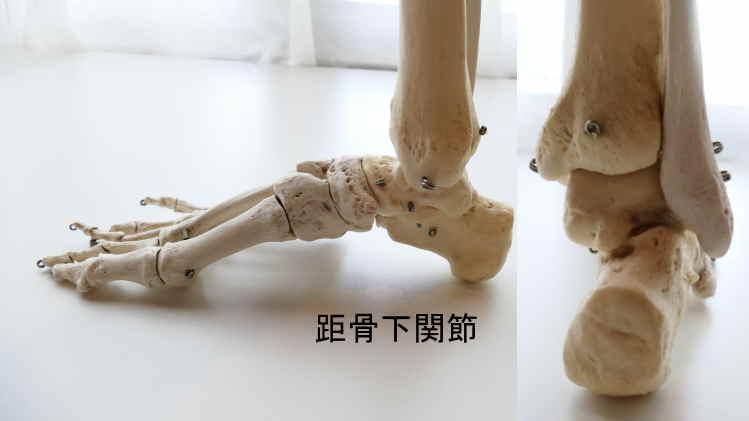 距骨下関節