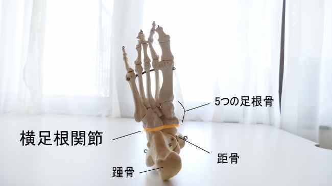 裏から見た横足根関節