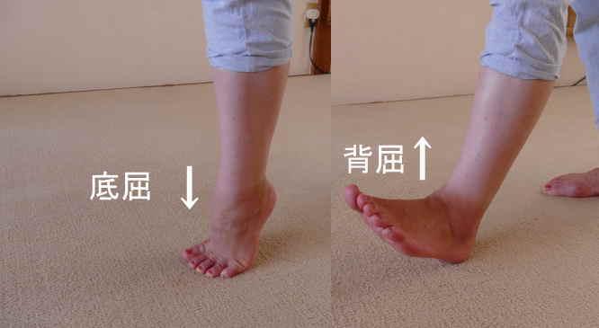 距腿関節の動き