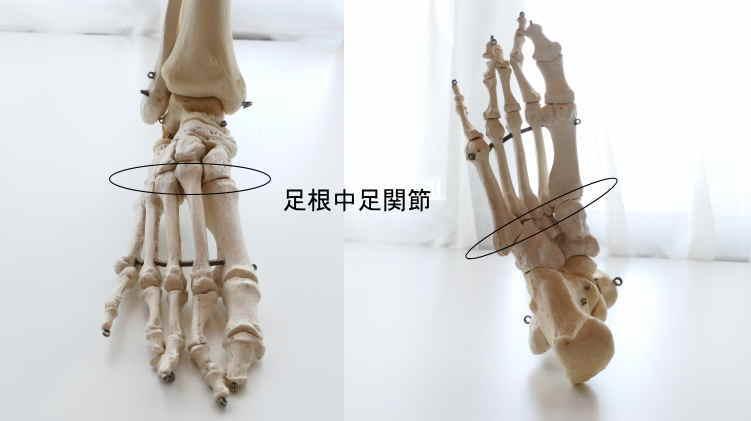足根中足関節