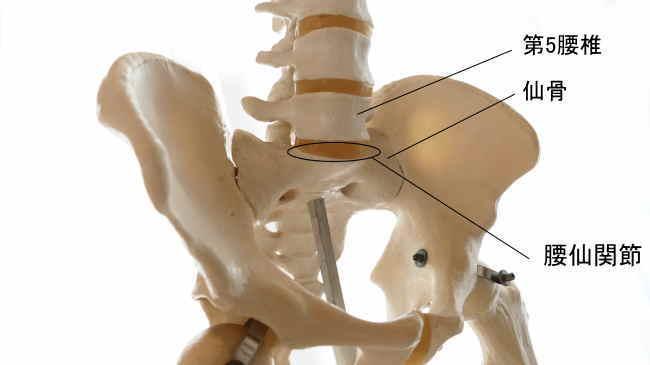 腰椎と仙骨の腰仙関節