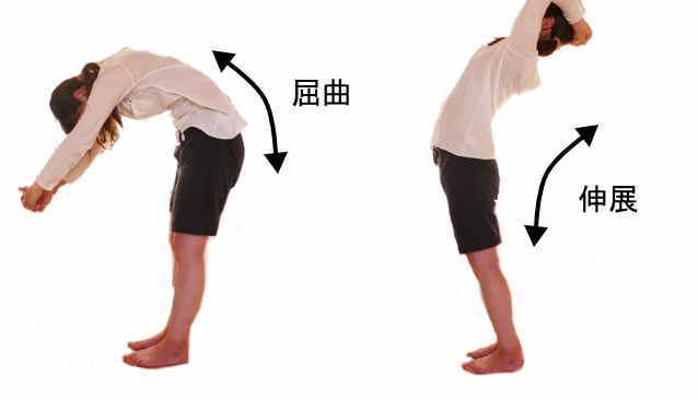 腰椎の屈曲と伸展