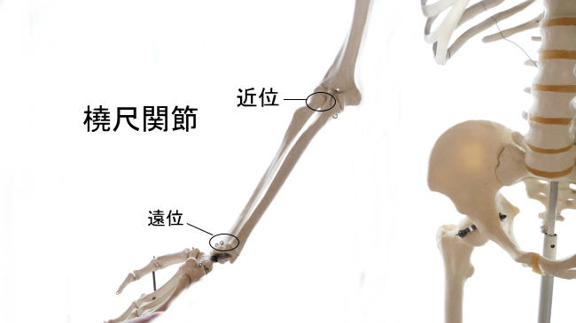 尺骨と橈骨の関節