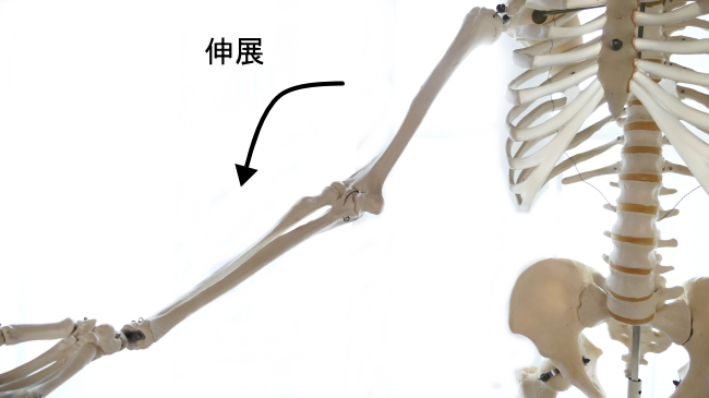 肘関節の伸展