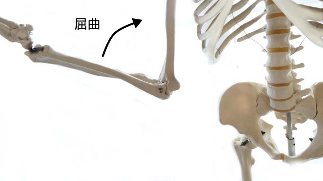 肘関節の屈曲