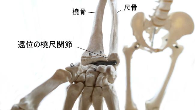遠位の橈尺関節