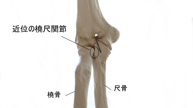 近位の橈尺関節