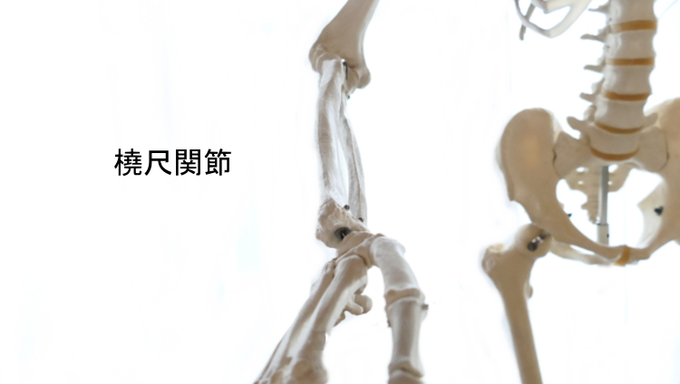 橈尺関節の構造と動き