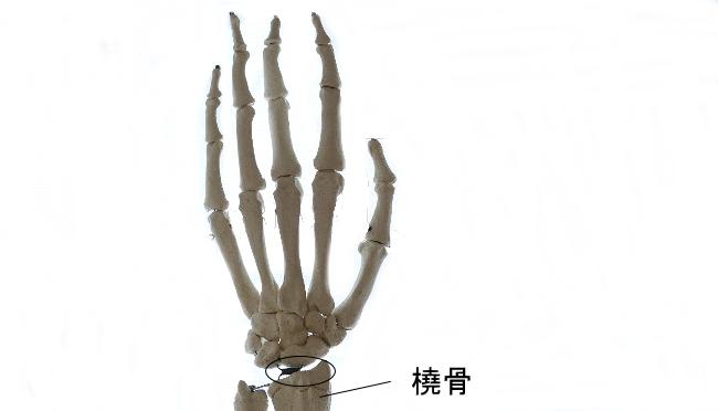 手根骨と橈骨の関節