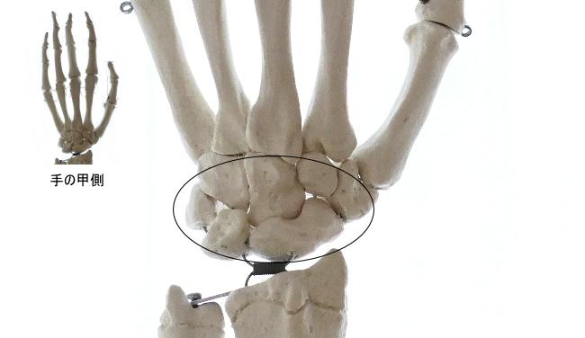 手根骨同士の関節