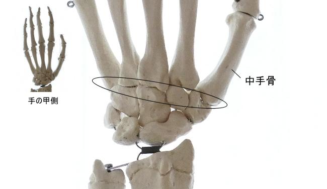 足根骨と中手骨の関節