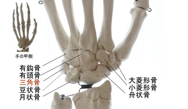 手掌側から見た三角骨