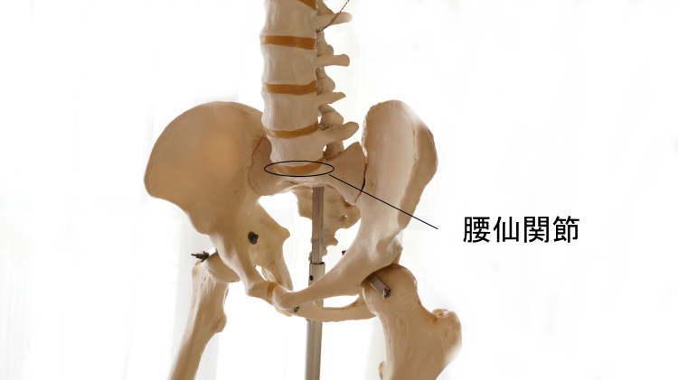 骨盤が作る腰仙関節