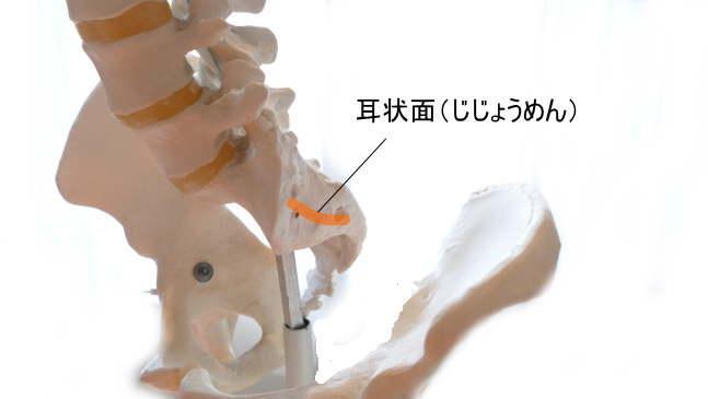 仙腸関節の中