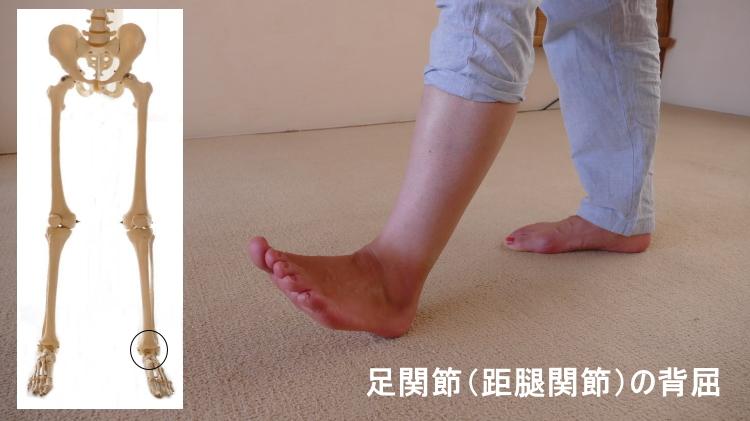 足関節の背屈の動き
