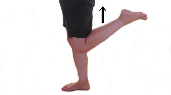 大腿四頭筋の働き