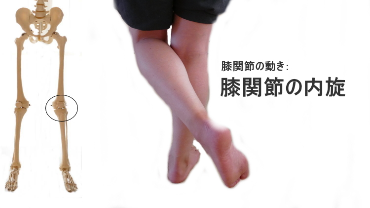 膝関節の外旋