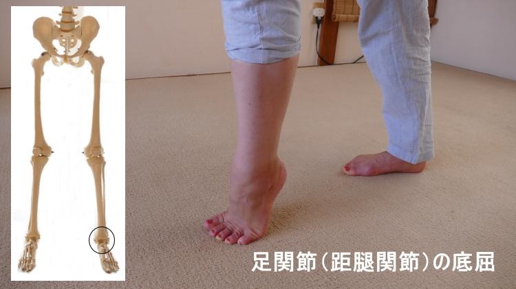 足関節の底屈の動き