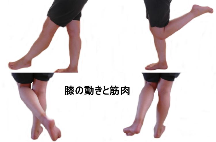 膝関節の動きと筋肉